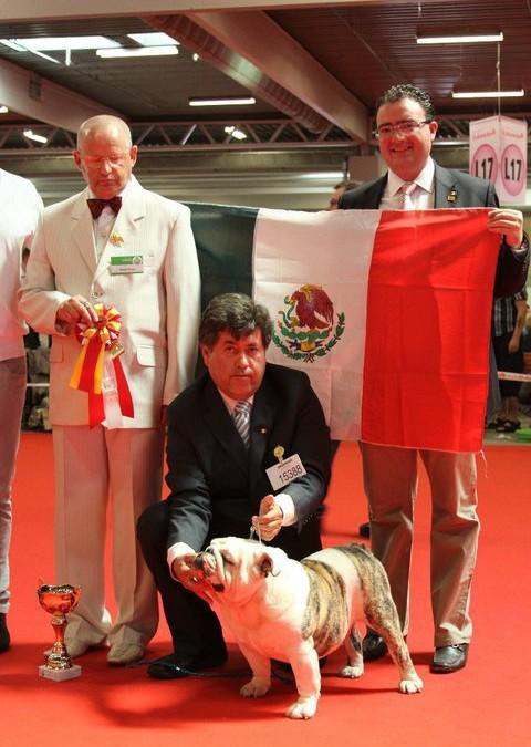 ¿Porque mexico es considerado uno de los países con mejores bulldogs a nivel internacional?