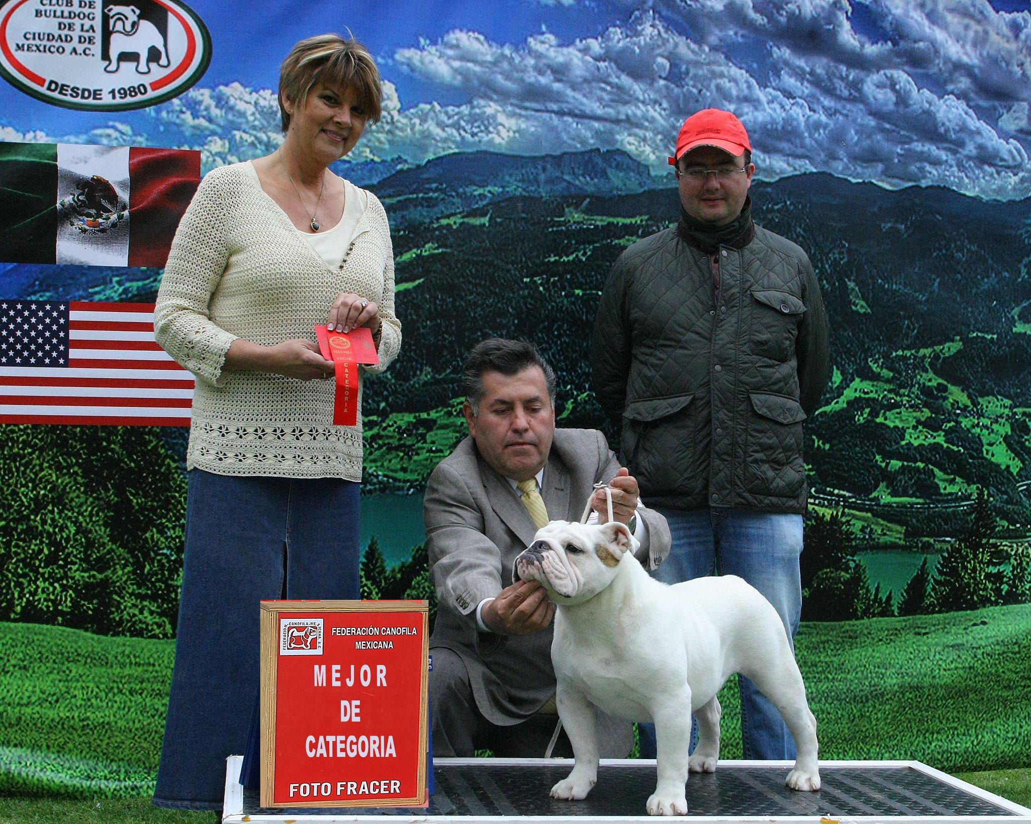 Como se puede hacer un perro campeón mexicano? Parte 1