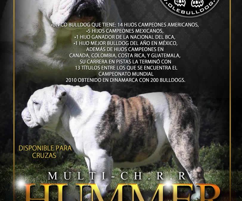 R.R. Hummer el mejor semental de México