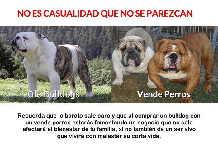 Fraudes en la compra de Bulldog por internet