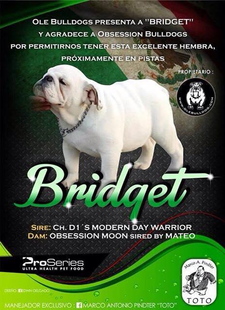 "Ole Bulldogs presenta a ""Bridget"""