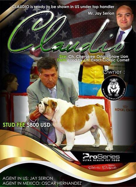Claudio is ready to be shown in the US under top handler Mr. Jay Serion